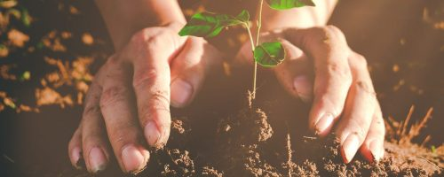 Seedling growing from fertile soil was gently encircled with hands, Concept of environmental conservation and protection of our world sustainable.